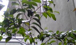 20120502 rainyday3.jpg