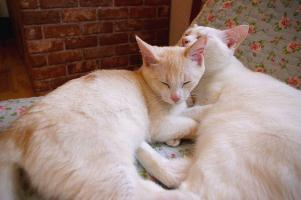 20120703two cats.jpg